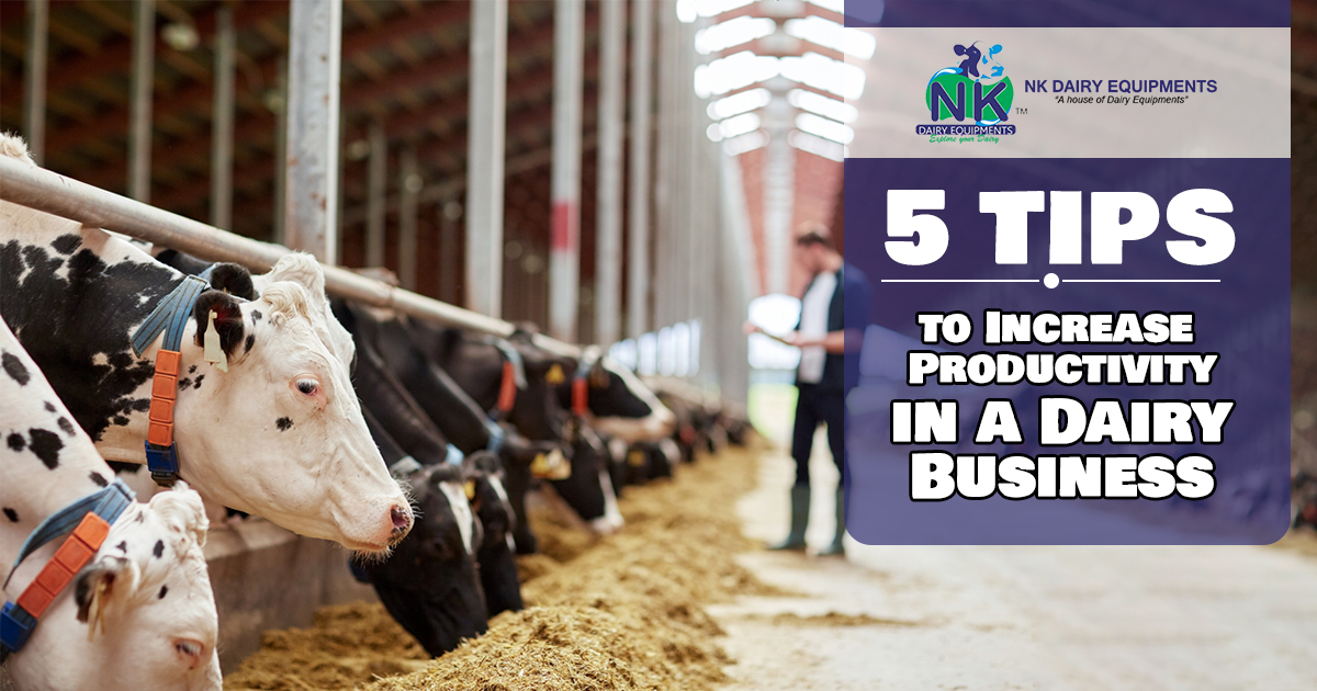 5 Tips to Increase Productivity in a Dairy Business